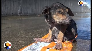 Download Dog Found Sitting On Trash Is So Loved Now | The Dodo Video
