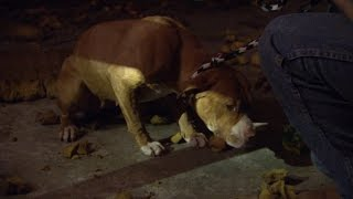 Download When a Sad Doggy is Too Petrified to Even Walk Video