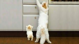 Download 「かわいい猫」 笑わないようにしようとしてください - 最も面白い猫の映画 #285 Video