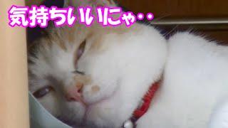 Download 猫にクールジェルマットをプレゼントしたらあまりの気持ちよさにすごい顔に‥ Cat receiving a cold mat Video