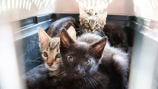 Download 4 Abandoned Kittens Rescued from Living inside a Tree Video