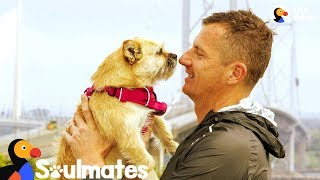 Download Guy Adopts Stray Dog Who Followed Him On Race | The Dodo Soulmates Video