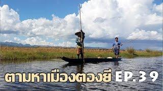 Download ตามหาเมืองตองยี EP.39 พายเรือไปเกี่ยวข้าวฟินสุด ๆ กับธรรมชาติบ้านนอกตองยี Video