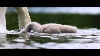 Download Nature & Music - Trailer Video