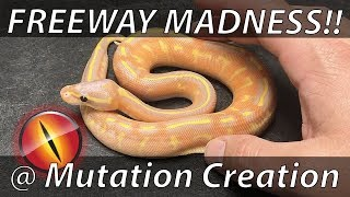 Download Freeway Madness! JKR Visits Mutation Creation - Toronto, Canada! Video