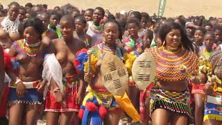 Download The Annual Zulu Reed Dance Video