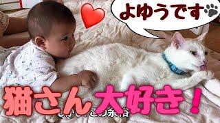 Download 赤ちゃんに優しすぎる神猫 Cat's tooooo sweet Video
