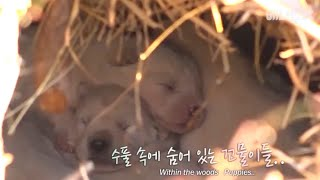 Download 무덤가에서 생긴 일ㅣPuppies were found.. in a grave?! Video