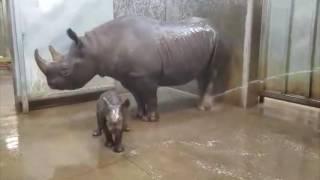 Download Rhino Bath Video