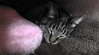Download 野良猫親子 猫ハウスでぬくぬくしてる猫をこっそり見たい Video