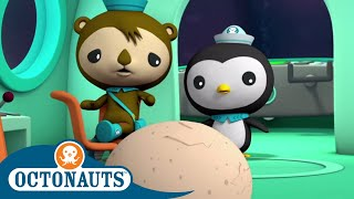 Download Octonauts - Strange Creature Found Underwater | Cartoons for Kids | Underwater Sea Education Video