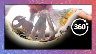 Download Seeing Pink Elephants (in 360 5K) Video