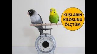 Download Kuşların Kilosunu Ölçtüm Video