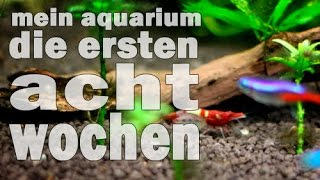 Download Mein Aquarium - Die ersten acht Wochen (Doku und Tutorial) Piscina #1 Video