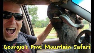 Download The Wild Animal Safari in Pine Mountain Georgia Video