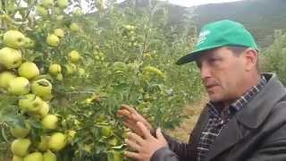 Download Elma Yetiştiriciliği Video