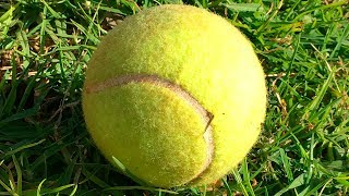 Download If You See a Random Tennis Ball, Don't Pick It Up! Video