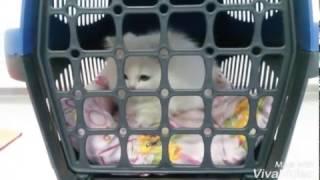 Download Kedi yıkama Video