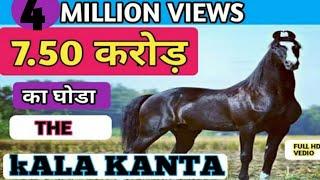 Download 7. 50 करोड़ का काला काँटा मारवाड़ी घोड़ा ( Marwari STALLION ) Behbal Stud Farm PART-1 Video