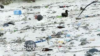Download Ambitious effort to clean up ″great Pacific garbage patch″ gets underway Video