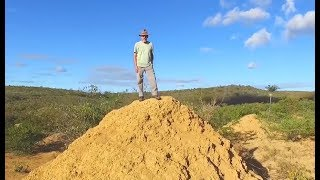 Download Termites Build Colony Larger Than England Video