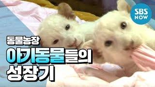 Download SBS [동물농장] - 아기동물들의 성장기 Video