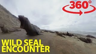 Download Get face to face with elephant seals in 360 Video