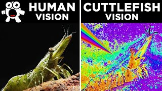 Download How Different Animals See The World Video