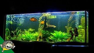 Download What makes a good aquarium? Video