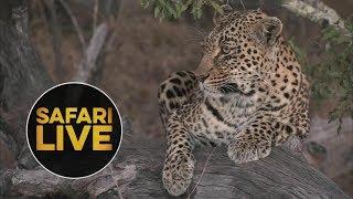 Download safariLIVE - Sunset Safari - July 22, 2018 Video