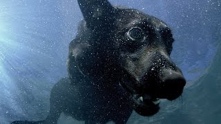 Download Underwater dogs - Pets - Wild at Heart: Episode 1 Preview - BBC One Video