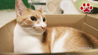 Download ダンボール箱と猫達【瀬戸のまや日記】Cardboard and cats Video