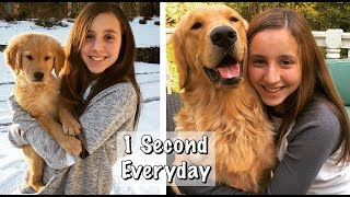 Download OUR PUPPY GROWING UP / Golden Retriever Puppy 8 Weeks to a Year Video