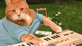 Download Keyboard Cat I LIKE SUMMERTIME! Video