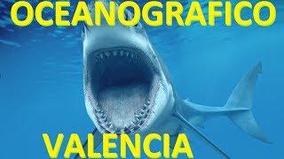 Download Oceanografico / Oceanografic Valencia Video