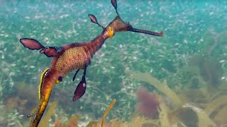 Download Sea Forests: 10 Hours of Relaxing Oceanscapes | BBC Earth Video