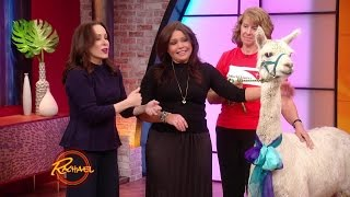 Download Patricia Heaton Surprises Rach... with a Llama?! Video