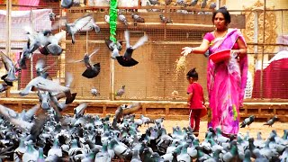Download Kabootar Khana (Pigeons' Park) at Koti in Hyderabad | HD Video Video