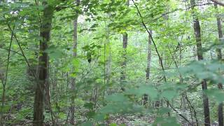 Download Screaming sounds in the woods, rocks thrown at camera - Georgia, 2013 Video