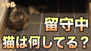 Download 留守中、猫は何してる?寝てるだけかと思ったらまさかの…!!!可愛すぎてYABEEEEEEE!!! Video