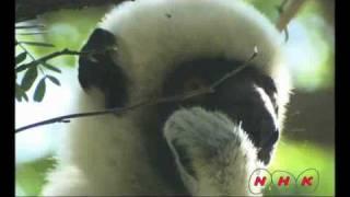 Download Tsingy de Bemaraha Strict Nature Reserve (UNESCO/NHK) Video