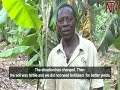 Download On The Farm: The decline of matooke farmng in Masaka Video