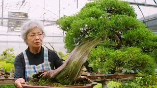 Download Bonsai: the Endless Ritual | Extraordinary Rituals | Earth Unplugged Video