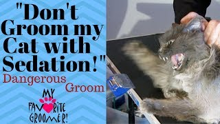 Download How to groom my old mean matted cat Video