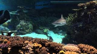 Download The National Aquarium Baltimore Video