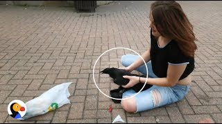 Download Crow Stuck in Garbage Rescued by AWESOME Woman | The Dodo Video