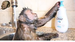 Download Capuchin Monkey Takes a Hot Relaxing Bath! Video