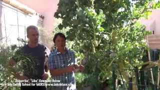 Download The BEST Las Vegas Backyard Garden - 5 AMAZING Plants for Desert Gardening Video