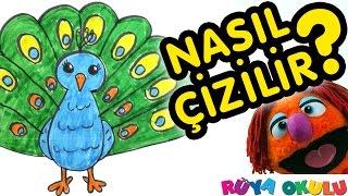 Download Nasıl Çizilir? - Tavus Kuşu - Çocuklar İçin Resim Çizme - RÜYA OKULU Video