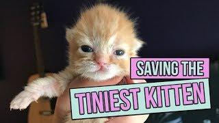 Download Saving the Tiniest Newborn Kitten Video